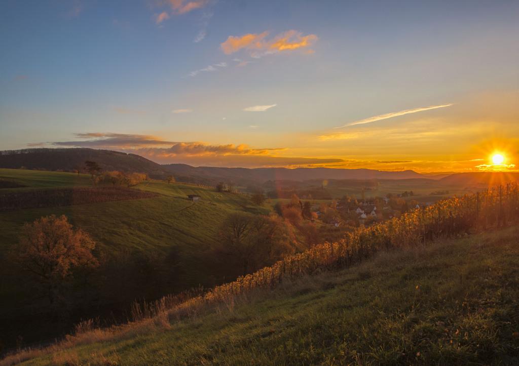 Blick über die Weinberge bei Wilchingen, Schaffhausen - bei einer geführten Wanderung mit Barbara Hutzl-Ronge