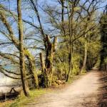 Frühling_Ufer_small