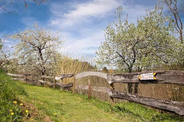 Wiesenweg mit urigem Holzzaun und Wegweiser Maria im Stein, im Hintergrund zwei blühende Obstbäume