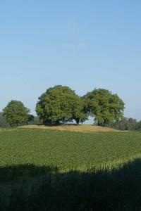 Der Grabhügel Heidenbühl auf dem Bodanrück bei Markelfingen, © Barbara Hutzl-Ronge
