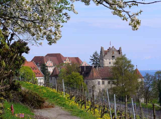 blühender Obstbaum, Weg oberhalb eines Weinbergs. In der Bildmitte die alte Meersburg und das neue Schloss, im Hintergrund der Bodensee