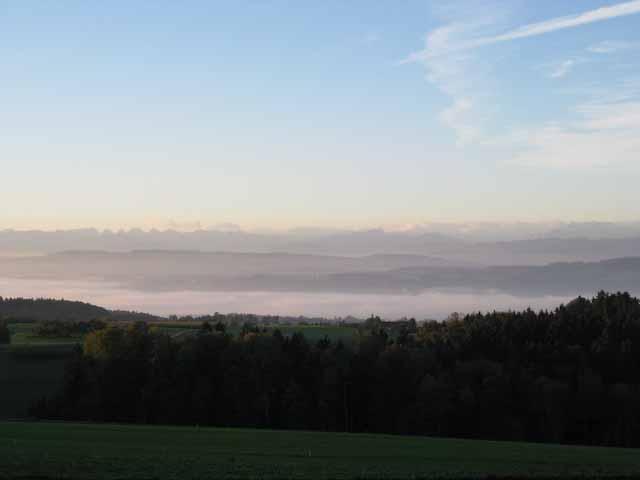 Blick vom Seerücken: die Wiese im Vordergrund ist dunkelgrün, der Wald fast schwarz, dahinter ein Nebelmeer und Fernsicht bis zu den Alpen, Seerücken oberhalb von Pfyn. Foto © Beat Wydenkeller